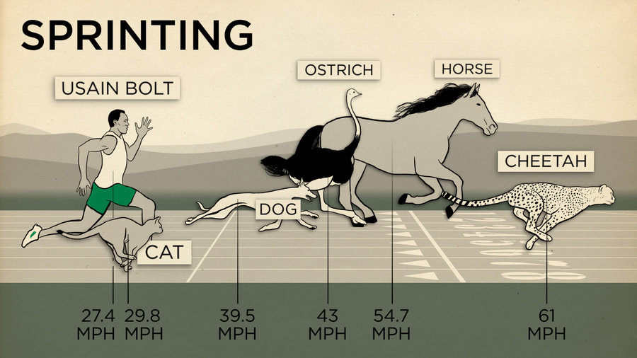 Human vs animal - which is faster