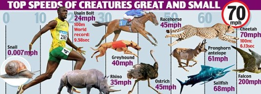 How fast are various animals compared with humans