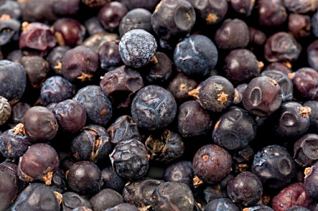 Dried Juniper Berries ready to be used